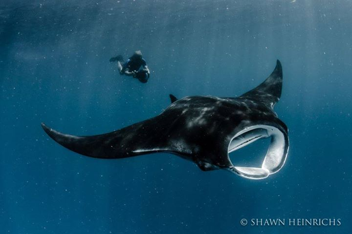 Louie filming manta rays for 6