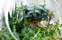 How To Make A Terrarium: The Complete Beginner's Guide